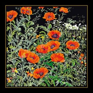 Borduurpakket Oranje Papavers Black Collection - Thea Gouverneur