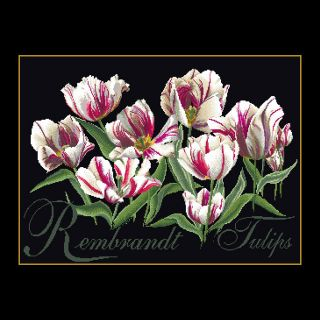 Borduurpakket Rembrandt Tulpen Black Collection - Thea Gouverneur