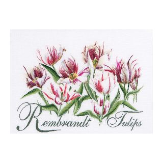 Borduurpakket Rembrandt Tulpen Aida - Thea Gouverneur